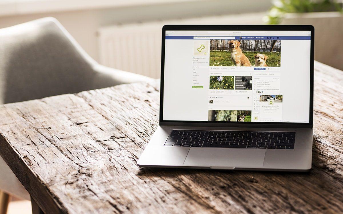 VTG-Tiergesundheit Facebook Seiter der Hunde